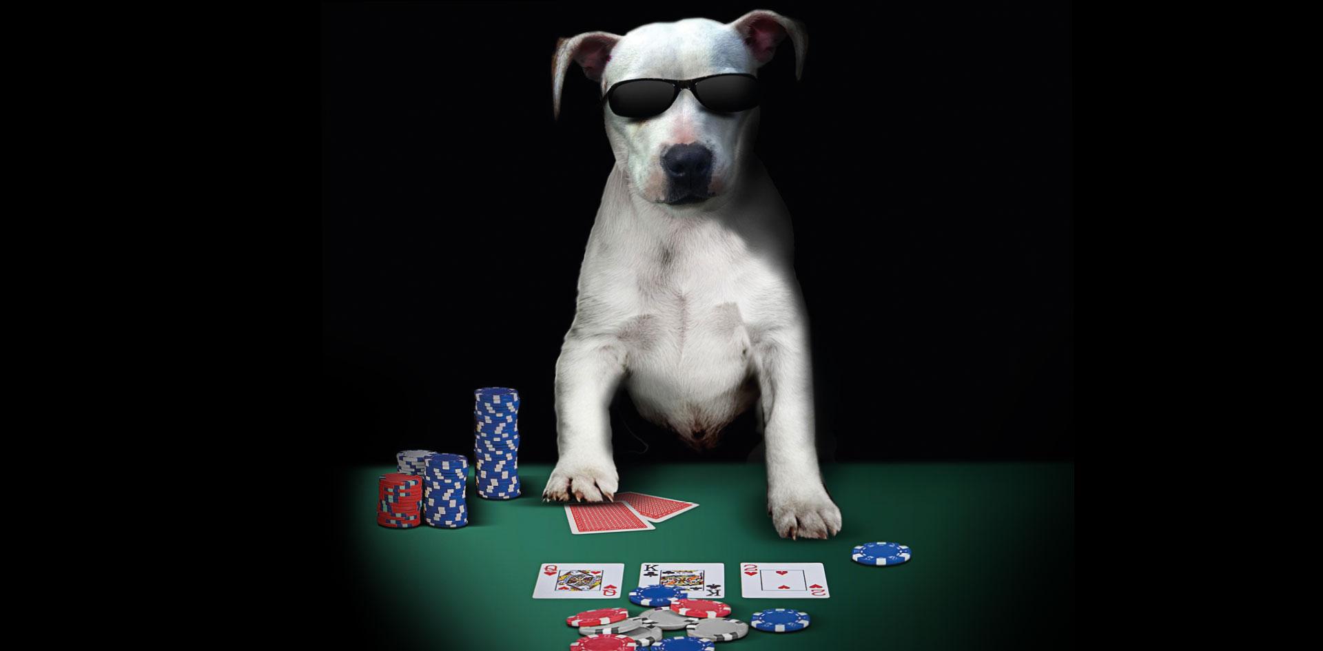 The casino mk reviews